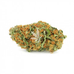 Fleur de CBD | ORANGE BUD - Greenhouse