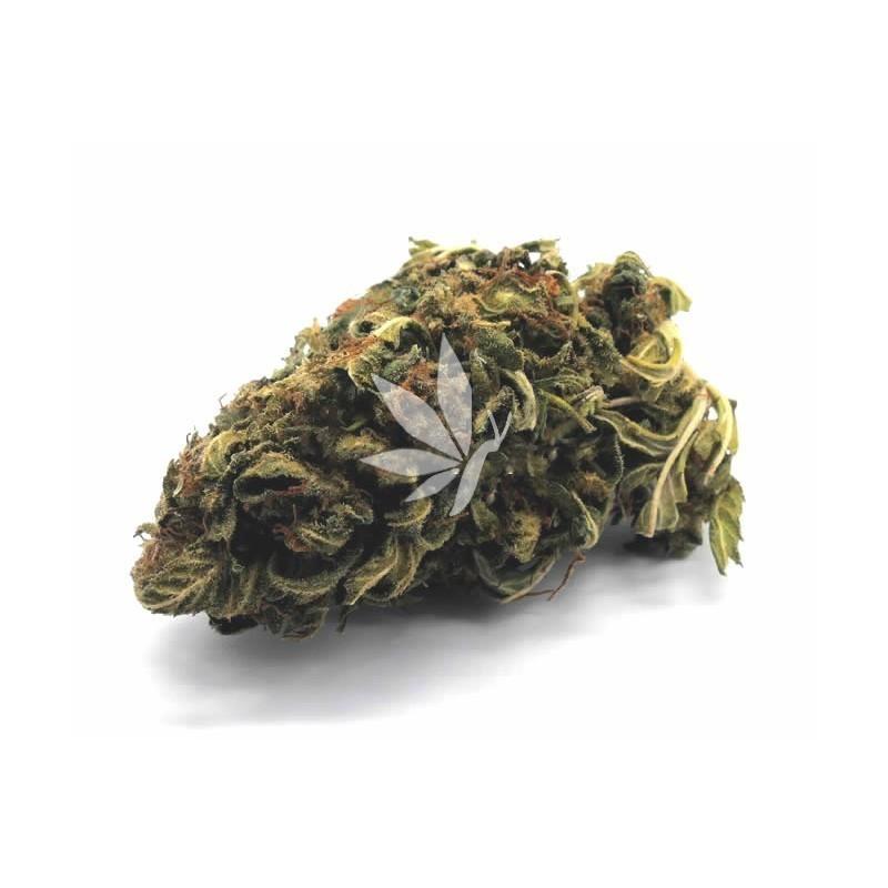 Fleur de CBD   CARAMEL CANDY KUSH - Greenhouse