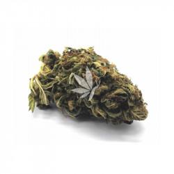 Fleur de CBD | CARAMEL CANDY KUSH - Greenhouse