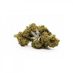 Fleur de CBD | BANANA MOON - Greenhouse