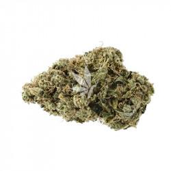Fleur de CBD - BIG BUD - Greenhouse