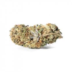 Fleur de CBD | BUBBA KUSH - Greenhouse