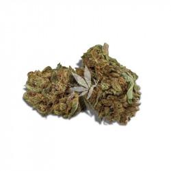 Fleur de CBD - HARLEQUIN - Greenhouse