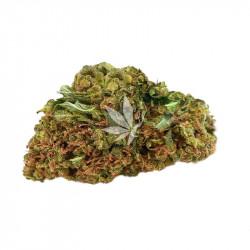 Fleur de CBD | STRAWBERRY HAZE - Greenhouse