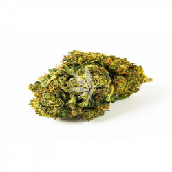 Fleur de CBD   APPLE PUNCH - Greenhouse