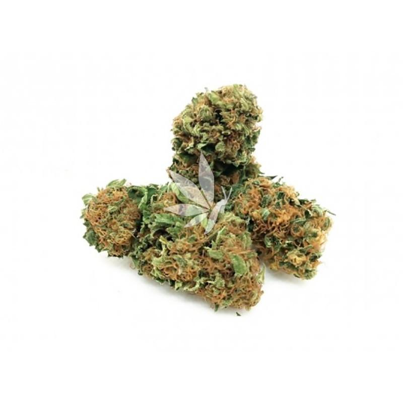 Fleur de CBD - GÉLATO - Greenhouse