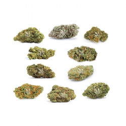 Fleurs de CBD | Pack découverte de 10 variétés - 20g