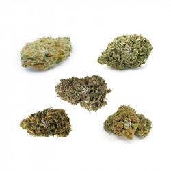 Pack fleurs de CBD - 5 variétés - 10g