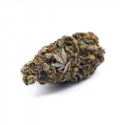Fleur de CBD | MANDARINE - Greenhouse