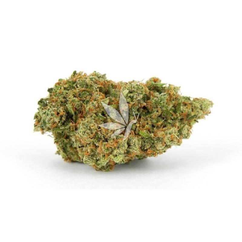 Fleur de CBD    Jack HERRER - Greenhouse